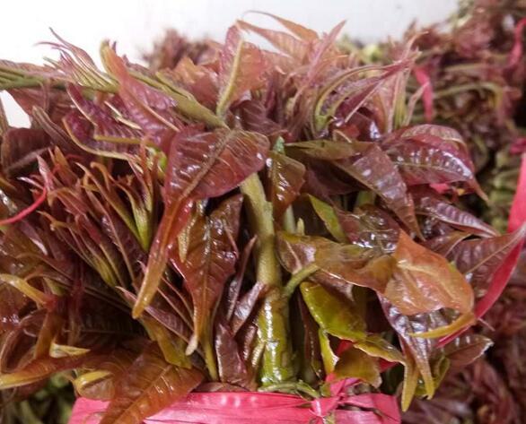 红油鲜香椿[图]
